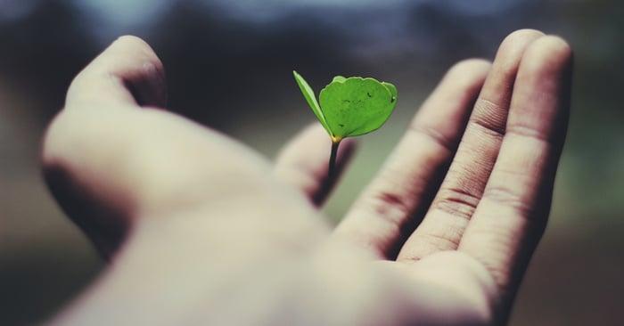 Kasvin itu nousee kädestä.